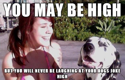 You may be high...but will never be laughing at your dog's joke high