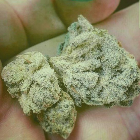 Crystaly AF #marijuana #weed #weedporn #weedstagram #weed420feed #weedlife #weedsociety #cannabis #thc #420life #maryjane #ganja…
