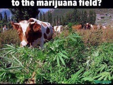 Edibles in the making 😮😎#420Problems#weedporn #weedmemes #420funny #420 #marijuana #edibles via @r0sied420