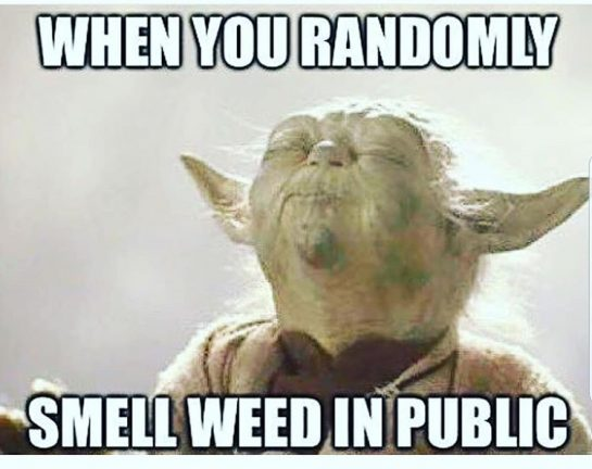 👃🌱aaaa good weed I smell!! 😂🤣😂🤣😂🤣😂🤣😂🤣😂 #starwarsmemes #420memes #420funny #Yoda #weed🍁 #iknewyousmoked 😂🤣😂🤣 . . . . . . . . . . ✌😎#420Problems#staybluntedmyfriend✌ via @bluntednewz