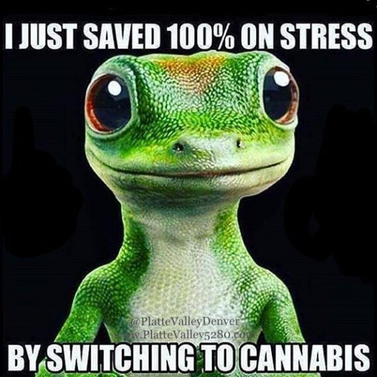 💯#CannabisIsBetter #420Problems#NoStress #MakeTheSwitch #SmartGecko #PlatteValleyDispensary via @plattevalleydenver