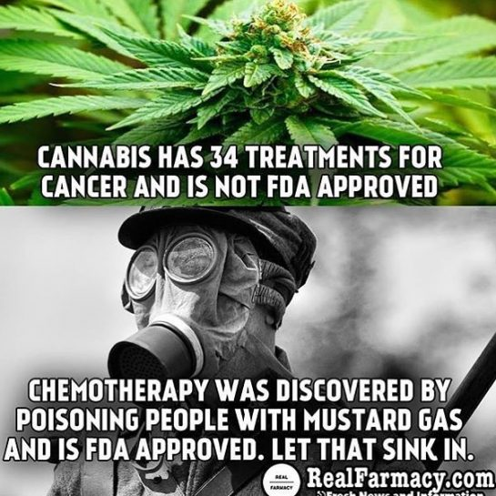 Cannabis/Marijuana treatments vs chemotherapy