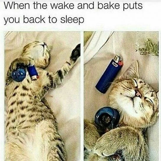 When the wake and bake puts you back to sleep