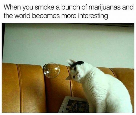 When you smoke a bunch of mj and the world becomes more interesting