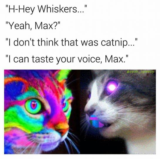 I don't think that was catnip, I can taste your voice, Max...