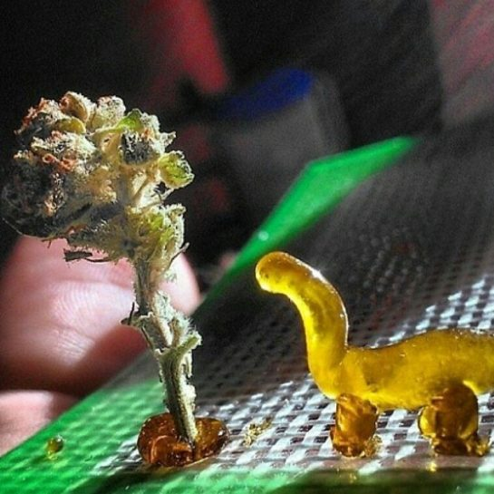 and here we have the weed-o-saurus in it's natural habitat