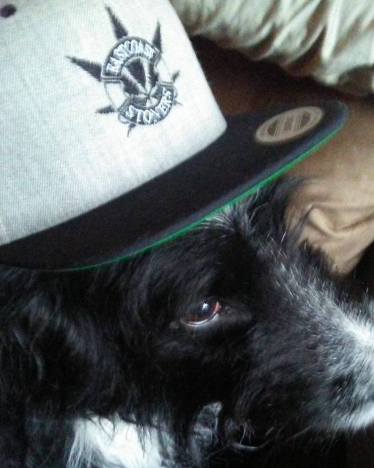What's up dog? You high? #cannabislifestyle #cannabiscures #weedstagram #cannabis #kush #weed #weedporn #medicalpatient #medicalmarijuana…