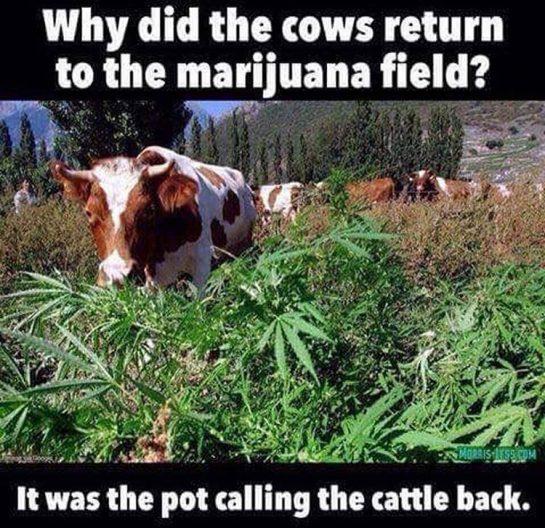 Edibles in the making 😮😎#420Problems#weedporn #weedmemes #420funny #420 #marijuana #edibles via @r0sied420