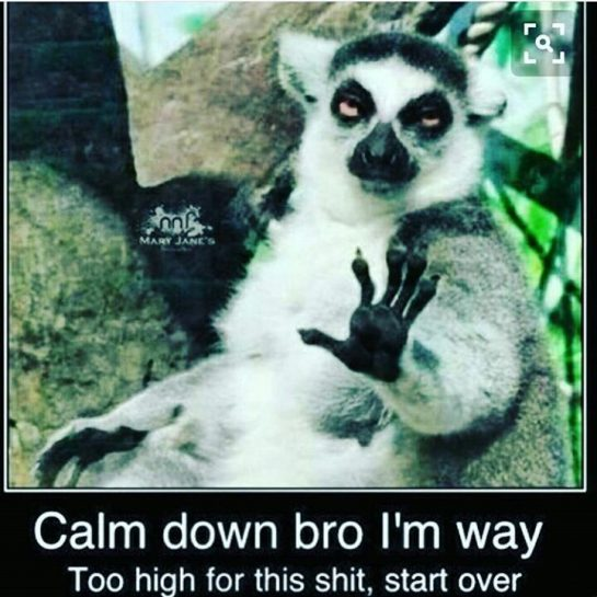Trying to listen to friends all stoned would be like... #420Problems#cannabishumor#weedhumor#marijuana#blaze#weed#ganja#funnystonershit#dabs#dabsallday#420#stoner#stonerhumor#cannabis#packit#fatdabs#dabhumor#kush#kushlovers#legalizeweed#legalizeit#420humor#cartoonstoners#gethigh#loveweed#funny#funnyshit#funnystonershit#supportyourfellowstoners via @cannabis__humor