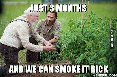 #420Problems#weedmemesdaily #weedmemes #the_devils_lettuce420 #walkingdeadweed #cannabismemes #marijuanacommunity #cannabisculture #cannabis #dankmemes #kushmemes #devilslettuce #420memes #smokeweedeveryday #smokeweedallday #weedlovers #funnyweedmemes #weedpage #legalizemarijuana #marijuanamemes via @the_devils_lettuce420