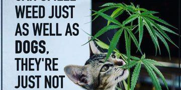 #420Problems#catscratchfever #catnip #funnypotmemes via @whizzy731