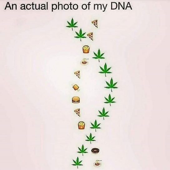 Accurate 💯😂👌🏻✌🏻🔥💨💚 #420Problems#highlife #highsocitey #highmom #stonerchick #stonercouple #cannabiscommunity #cannamommy #710community #710lover #stonermom #girlswhodab #dabchick #dabsfordays #420everday #budlife #budlove #staylifted #weedstagram #dabstagram #dablife #momswhodab #parentsforpot #710moms #bongsareagirlsbestfriend #420mom #stonermemes #memesfordays #dailymemes #420funnies via @cannasammy92