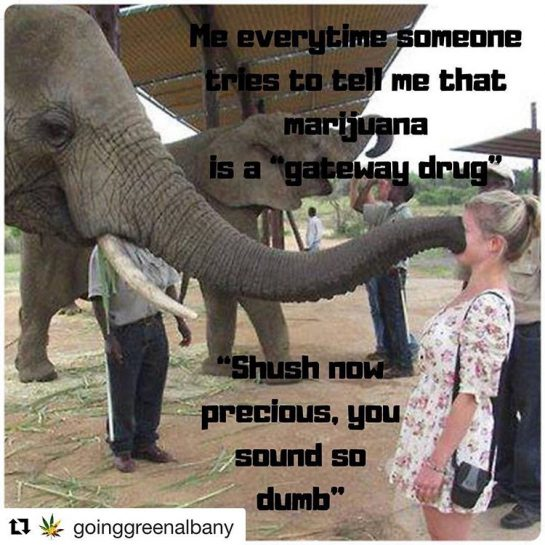 😅😂😎👏🏻 For reals though 😉💚 #Repost @goinggreenalbany with @get_repost ・・・ Even the elephant knows 🐘🐘 🤫🤫😄😅 Maybe a gateway to the pint of ice cream in the freezer 🤔🍦🍦🤣 #420Problems#dankweedmemes #goinggreen #goinggreenalbany #useresponsiblyandwithpurpose #21andover #stonercommunity #stonersociety #thatsallineed #stereotypessuck #breakthestigma #successfulstoners #ohnoshedidnt #shushnow #dontjudge via @growinggreenalbany