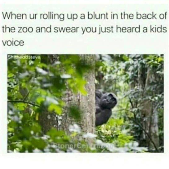 😂😂😂😂 #pettypost #pettyastheycome #420Problems#straightclownin #hegotjokes #jokesfordays #itsjustjokespeople #itsfunnytome #funnyisfunny #randomhumor #animalhumor #rellstilldarealest #420humor #420shit #forpeepsmarriedtothejuana via @rellstilldarealest
