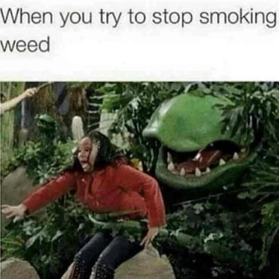 #true #relatable #stonerhumor #smoking #weed #weedmemes #memesdaily #same #juststonerthings #420 #funny #funnyshit via @wholyf.uck#420Problems, #420funnies, #420memes, #marijuanafunnies