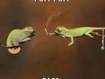 Puff Puff Pass #weedhumor #weedhumor420 #weedmemes #420memes #dankmeme #dankmemes #kushmemes #memesweed #pnwstoners #weed #cannabis #marijuana #kush #ganja #stonernation #hightimes #alwayshigh #highlife #stayhigh #cannabiscommunity #weedsociety #wakenbake #420life #pothead #potheadsociety #420 #710 via @cannaddict420#420Problems,