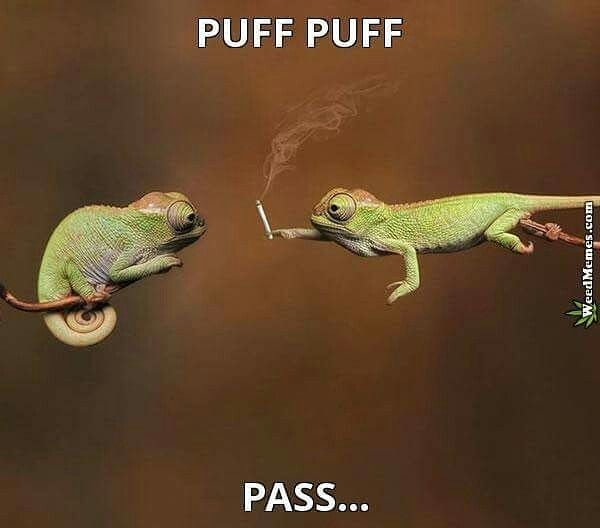 Puff Puff Pass #weedhumor #weedhumor420 #weedmemes #420memes #dankmeme #dankmemes #kushmemes #memesweed #pnwstoners #weed #cannabis #marijuana #kush #ganja #stonernation #hightimes #alwayshigh #highlife #stayhigh #cannabiscommunity #weedsociety #wakenbake #420life #pothead #potheadsociety #420 #710 via @cannaddict420#420Problems,