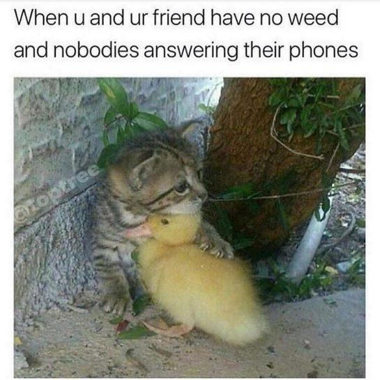 It's ok I got you lil buddy 😞💔😂 #igotyou #buddy #outofweed #no #fml #waaah #saddays #420 #420memes #maryjane #shesmymainthang #weed #weedmemes #cannibus #sativa via @lemist33#420Problems, #420funnies, #420memes, #marijuanafunnies