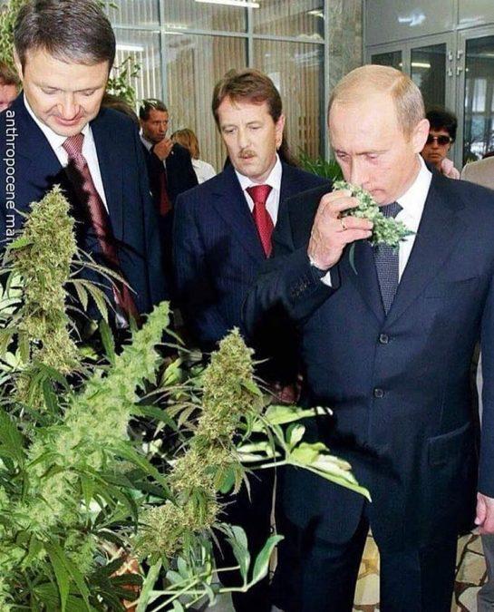 History, Putin smelling weed. #weed#weeds#putin#fattanza#officialfattanza#fattanzainabbondanza#weedhumor#weedmeme#weedmemes#420memes#amsterdam#amsterdamcoffeeshop#iamsterdam#amsterdamcity#losangeles#la#ladispensary#dispensary#dispensarylife via @luxgweed#420Problems,