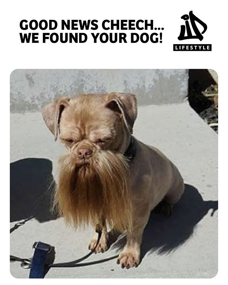 Found this pup on the corner, somebody call Cheech! #ijplifestyle . . . . . #photooftheday #likesforlikes #dogsofinstagram #doglover #badass #seller #medicated #legalize #marijuana #weed #weedhumor #beard #mustache #dealer #funny #followback #doubleclick #saturday #cannabis #etsy link on bio #cheechandchong via @ijplifestyle#420Problems,