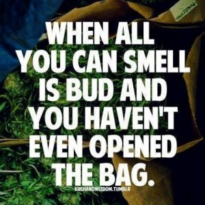 #sativafeva #420 #weekendvibes #smokeweedeveryday #redeyesbigsmile #elevated #smokingonthatloud #iriestateofmind #ganjalove #ganjalife #potheadsofinstagram #weedmemes #weedhumor #kushgotmelike #baked #ganjagoddess #sativadiva #cannabisculture #lit #hightillidie #highlife #highlifestyle #highasfuck via @the_official_kelly_k#420Problems,