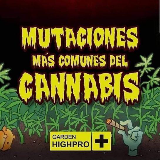 Pequeña infografía de las mutaciones del cannabis. Reposteado de @gardenhighpro . . . #cannabiscommunity…