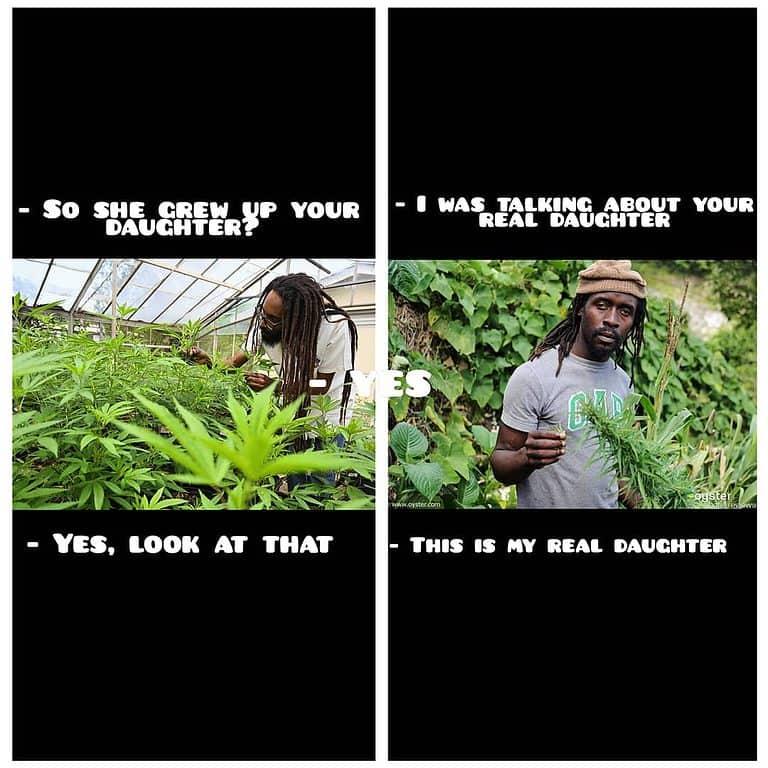 #weed #weedmeme #stoners #funnymemes #wizkhalifa #bobmarley #join