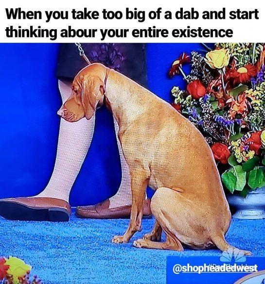 Who's been there before? . . #dankmemes #dankmeme #dailymeme #memesdaily #dailymemes #funnymeme #weedmeme #weedmemes…