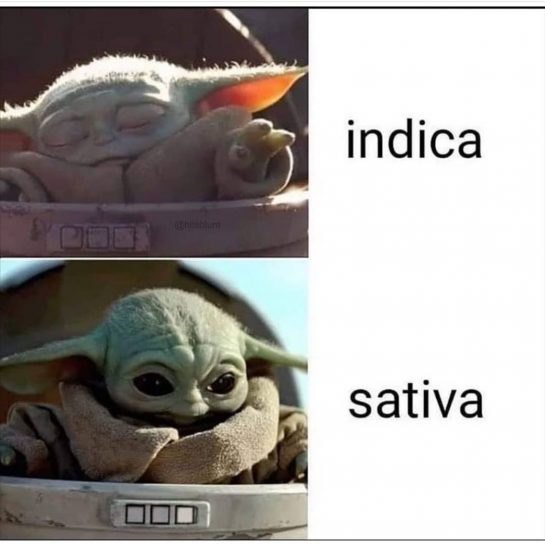 Baby Yoda memes are so hot right now! 🤷‍️ . . #weedmemes #weedmeme #HMSmokeshop…