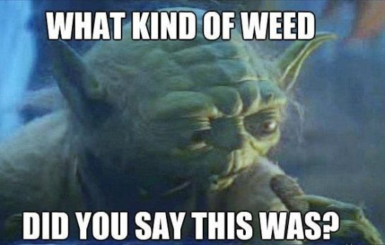 Only the best #weedmeme #weedstagram420 #weedhumor #weedporn #weedmemes #weed #memesdaily #meme #marijuanamemes #marijuanameme #marijuana…