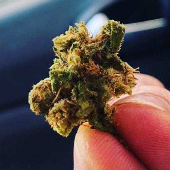 #weedlover #cannabisgrowers #weedgram #weedcommunity #weedmaps #weedchile #cannabislifestyle #weedsociety #weedgirls #thevampirediaries #tagify_app #weedwomen #weeding #weedlife…
