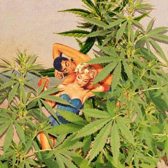 just me and my ladies. #stonedmemes #weedhumor #stonedtothebone #weedhumour #weedmemesdaily #weedmeme #weedjokes #weedfunny #weedfun…