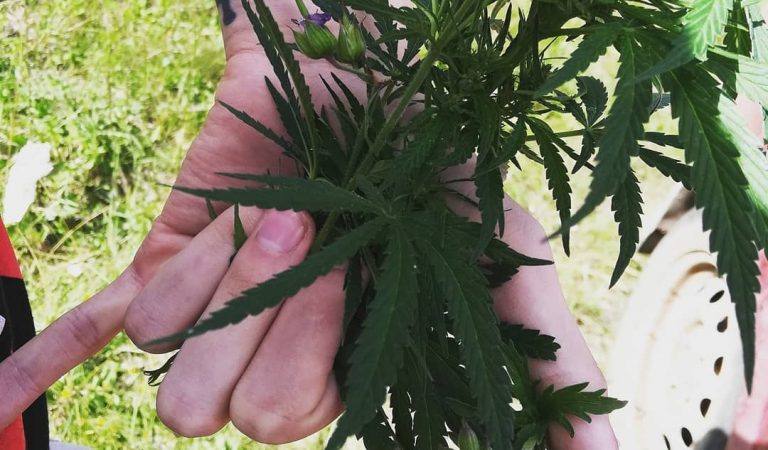 🤙🤙🤙 . . . . . . . . #weed #weedsociety #weedsex #weedgirl #weedpics…