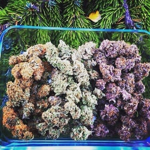 Pick a colour #weedmeme #weed #kush #kush #haze #herb #godsplant #ganja #gas