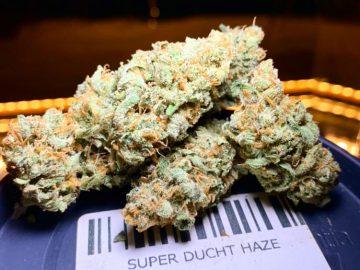 Super Dutch Haze #dam #damsquare #hash #weedbarcelona #bestweedbarcelona #bestweedbcn #weedbcn #coffeeshop #cannabisclub #cannabis #marijuana…