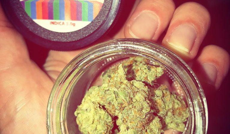 🧡🧡🤤 weedjoints #weedmeme #weedmemes #weed #weedgirl #weed420 #420 #ganja420 #ganja #ganjagirl #ganja_geek_gang #marijuana #cannabis…