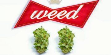 #420 #cannabiscommunity #cannablog #cannabis #weed #weedstagram420 #weedmeme #weedpics #THC
