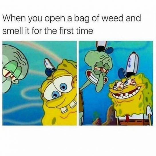 Nothing better than a fresh new pack #stoner #stonermemes #cannabis #stonergirls #weedhumor #pothead #potheadsbelike…