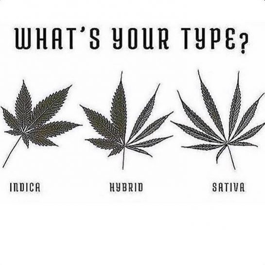 Love an #indica dominant you? 🤩
