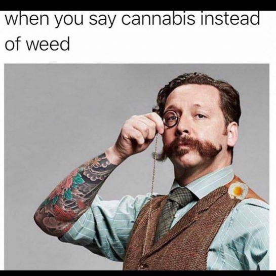 Mmm yeas why hello there lol #funny #cannabismeme #cbdmeme #potmeme #weedmeme #fancyguy #fancylady #lol…