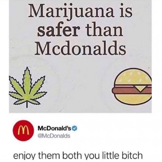 you little bitch | | #weed #cannabis #marijuana #cbd #joint #blunt #joints #blunts #meme…