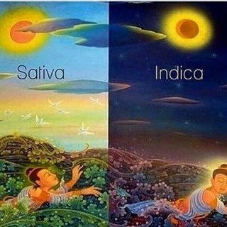 #indica #sativa #nightandday #marijuanamemes #stonermeme #weedmeme #hightimes #highlife #medicalmarijuana #michiganmarijuana #puremichigan #cannabis #cannabiscommunity #mmj…