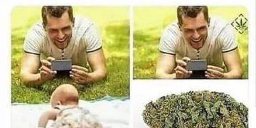 Sicierto. . . . . . . . #420 #420girls #420life #420memes #cultivoindoor #cultivo…