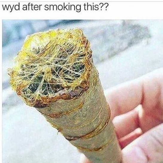 That's one way to get rippy #weedmeme #weed #weedmemes #memes #weedporn #meme #cannabiscommunity #weedstagram…