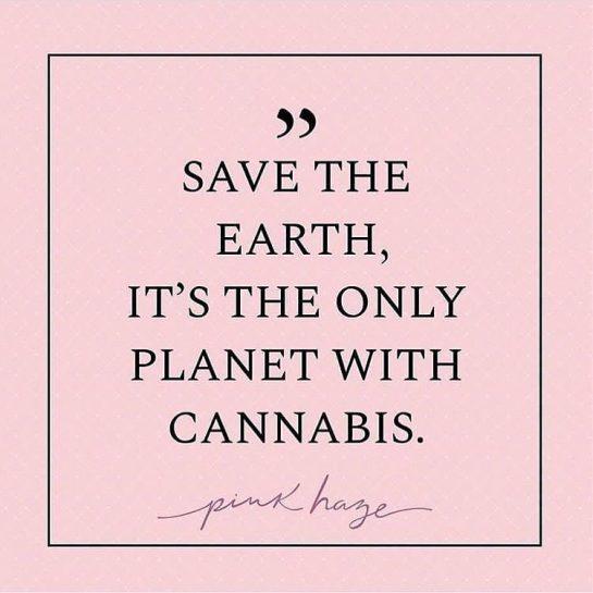 soooooo! Fr fr . . . . . #weedmeme #sativa #indica #420humor #weedhumor #weedmeme…