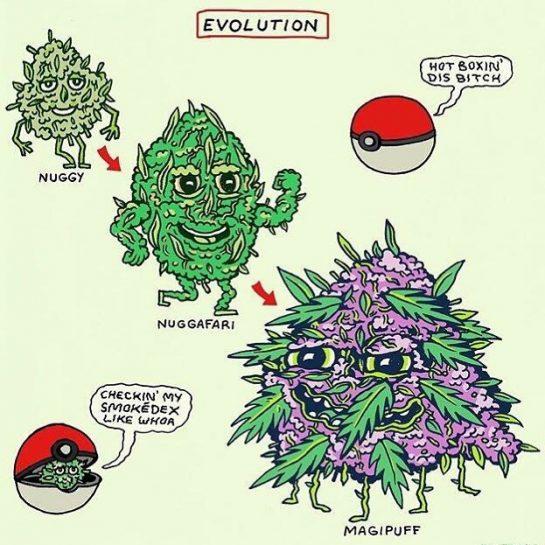 ・ Tokémon, gonna blaze 'em all. ・ ・ ・ ・ ・ #cannabis #flower #pot…