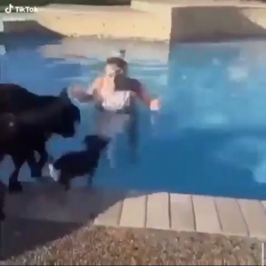 lil dog was not fucking about . . . . #meme #memes #funny #coronavirus…