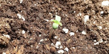 Start of life! Keep an eye on this Series 3 Red Spec grow! .…