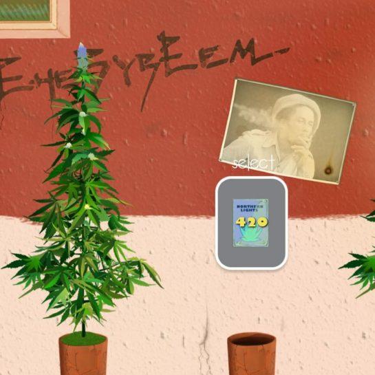It's 4:20 somewhere #weedfirm2 #weedfirm #smokeup #bong #dank #highlife #fourtwenty #kush #sativa #marijuana #cannabiscommunity…