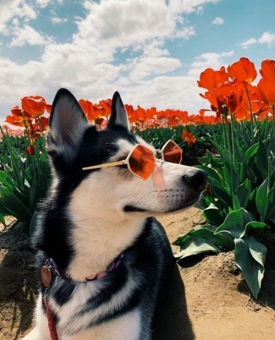 See the day with rose-colored glasses today. The weekend is on the way